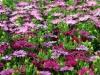2017-05-09 bloemen 019