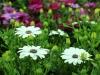 2017-05-09 bloemen 020