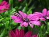 2017-05-09 bloemen 025