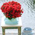 romantische_tuin_2