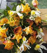 februari_roos_koningin_der_bloemen_3