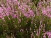 Plantperiode oktober