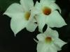 2017-05-09 bloemen 007