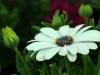 2017-05-09 bloemen 023
