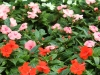 2017-05-09 bloemen 054