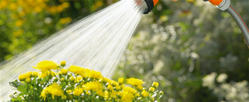 planten_water_geven - kopie