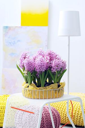 hyacint_woonplant_vd_maand3