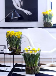 narcis_woonplant_vd_maand2