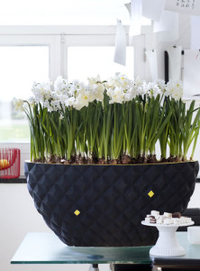 narcis_woonplant_vd_maand3