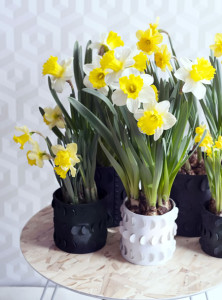 narcis_woonplant_vd_maand5