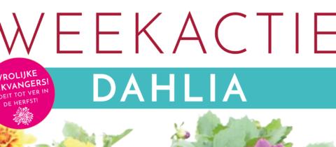 Weekactie: Extra lang en voordelig genieten met Dahlia's !